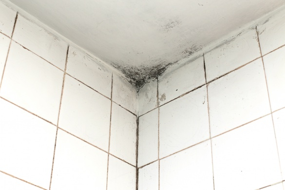 Tips to Prevent Mold Growth in Your Bathroom