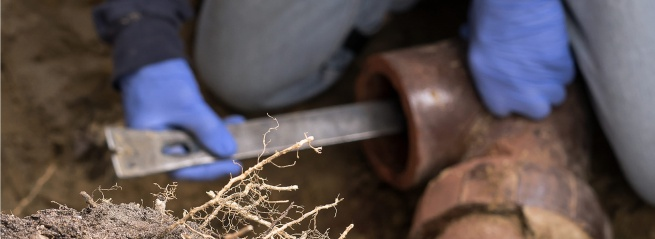 Removing Stubborn Roots